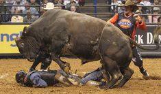 Three words of advice... Duck and Cover!  Professional-bull-riding-in-St-Louis,Las Vegas