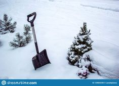 Black shovel on white snow to remove snow in winter garden / for