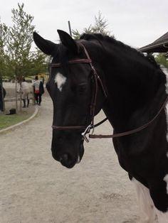 easy breezy bridleful, My horses