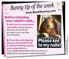 Pet bunny care life Ideas for 2019 Rabbit Life, House Rabbit, Pet Rabbit, Bunny Toys, Baby Bunnies, Cute Bunny, Bunny Rabbits, Funny Bunnies, Rabbit Facts