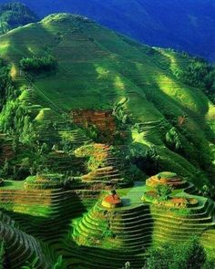 Terraced rice fields. China