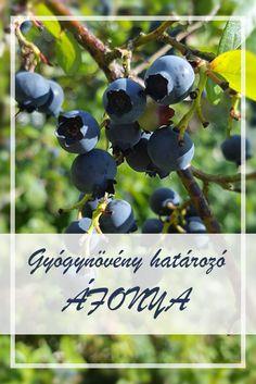 Herbalism, Herbs, Fruit, Healthy, Nature, Herbal Medicine, Naturaleza, Herb, Health