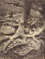 The Original Ent?The form of a man emerges from the roots of a tree shot by Eugene Atget in Saint-Cloud Park. This photograph's subject was unusual for the time and in fact Atget was criticized for. Eugene Atget, Google Art Project, Alfred Stieglitz, Old Paris, Getty Museum, Portraits, Tree Roots, Fine Art Photo, Art Themes