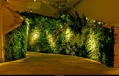 Jardim Vertical Iluminação