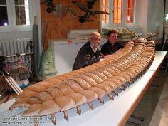 Há muitas espécies pré-históricas que dariam medo em qualquer nos dias de hoje.