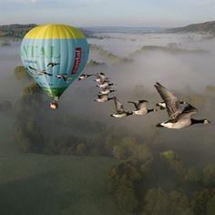 Vol en Montgolfière et Vol avec les Oiseaux dans le Cantal
