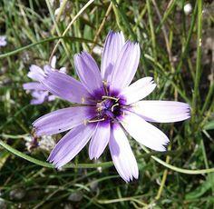 Violet flower http://www.biomannafarms.com/blog