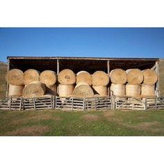 Hay Barn Ahuriri Valley North Otago South Island New Zealand Canvas Art - David Wall DanitaDelimont x Hay Barn, South Island, New Zealand, Canvas Art, Wall, Crafts, Barns, David, Manualidades