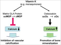 Vitamin K2 works synergistically with magnesium, calcium and vitamin D to impart a number of important health benefits.
