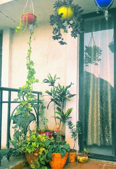 Hanging Baskets In My Small Balcony Garden