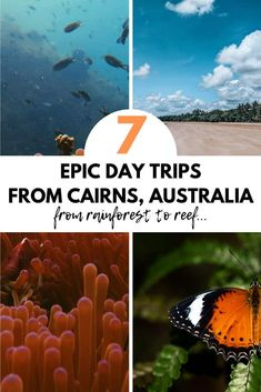 The best day trips from Cairns Australia - includes great barrier reef tour Daintree Rainforest things to do in Cairns car hire tips where to stay in Cairns and so much more! Australia Funny, Australia Tours, Australia Day, Queensland Australia, Melbourne Australia, Australia Travel, Western Australia, Perth, Brisbane