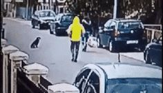 Street dogs can be heroes