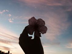 Flower Aesthetic, Aesthetic Photo, Aesthetic Pictures, Tumblr Photography, Photography Poses, Nature Photography, Travel Pictures, Cool Pictures, Beautiful Pictures