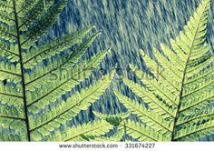 Lizenzfreie Bilder und Vektorgrafiken kaufen, Bilddatenbank - Shutterstock