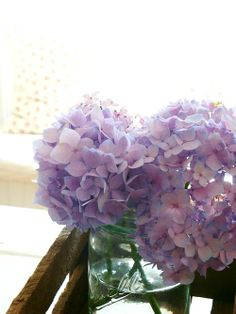 I might be a little obsessive about my hydrangeas.