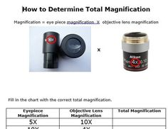 Basic Worksheet Including The Formula For Calculating The Magnification Of  A Compound Light Microscope As Well