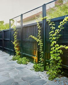 40 Unique Garden Fence Decoration Ideas Fence is also an important part of your garden or yard as it takes up a large space of your garden. So you should also pay attention on it and decorate it. So it's time to wake up your creativity… Continue Reading → Backyard Fences, Backyard Landscaping, Vine Fence, Black Garden Fence, Backyard Privacy Trees, Driveway Fence, Landscaping Edging, Garden Frame, Brick Garden