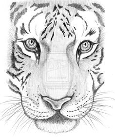 tiger_sketch_by_schre-d3dym3z.jpg (900×1087) Ooh! This one looks cool
