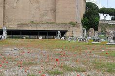 """Les presque """"champs"""" de Coquelicots du Forum Romain (@Foro Romano), ROME"""