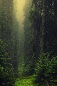 dark misty forest - Carpathians, Ukraine (by SergeyIT) Taken on August 11, 2013
