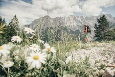 Impressive view of Hochtor north faces Alps, North Faces, Mountains, Nature, Travel, Outdoor, National Forest, Summer, Outdoors