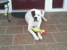 Isla with her chicken.