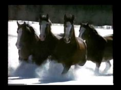 1992 Budweiser Beer Clydesdale Horse Commercial