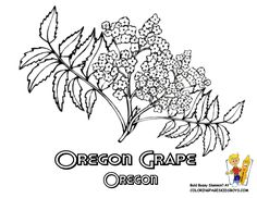 1000 images about usa coloring pages on pinterest for Oregon craft floral