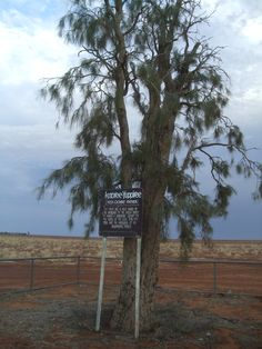 "Sacred tree: Waddie tree ""Red Ochre Father"""