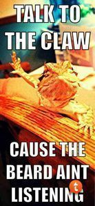 funny bearded dragon - Google Search #beardeddragoncagediy #beardeddragonfunny #beardeddragonideas