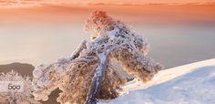 winter landscape  Photo by Andriy Solovyov on  www.solovyov.biz