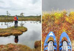 Wandern in Estland – Erfahrungsbericht zur Moorschuhwanderung im Soomaa Nationalpark. Estlands größtes Hochmoor Kuresoo.