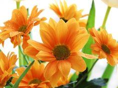 Flowers Orange Chrysanthenum L x W 2 Piece Wallpaper Trellis Wallpaper, Star Wallpaper, Embossed Wallpaper, Wall Wallpaper, Buy Wallpaper Online, Paradise Garden, Hazelwood Home, Tropical Leaves, Wall Murals