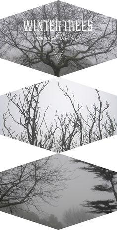 Rose Tinted Illustration - Winter Trees