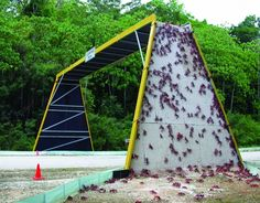Christmas Island National Park- red crabs using a crossing as part of their migratory route.