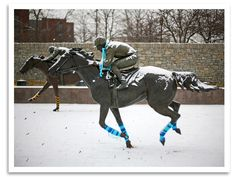 ♥>Horse Race Betting System