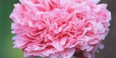 pink color 9