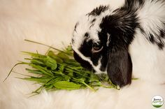 Foraging 101 - Collecting Fresh Greens for Your Rabbit