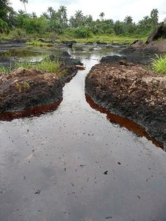 The impact of an oil spill near Ikarama. No attempt has been made to clean up the oil which has collected on the creek sides, washes in and out on the tides and has seeped deep into the water table and farmland.  #boycottShell