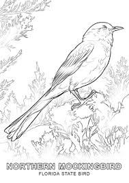 Image Result For Florida State Flower Coloring Pages Bird