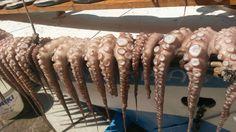 """On trouve de tout dans le marché aux poissons de Naxos - Carnet de voyage """"Grèce 2015 - Voyage en blanc et bleu"""""""