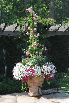 Pink-mandevillea.  Deck-garden - Detroit Garden Works via Dirt Simple Blog.  Deborah Silver landscape and garden designer.
