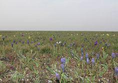 Trockenrasen auf Schotter werden auch von Schmetterlingen wie dem Schwalbenschwanz geschätzt.