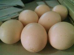 Về nhà là được ăn trứng căng bụng thôi °[]°