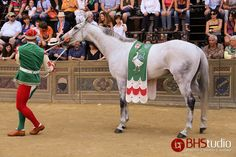 The winner horse of the Palio di Siena July 2013.
