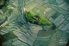 Ilôt dans les rizières en terrasse de Bali, Indonésie (8°30' S - 115°26' E)