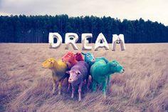 © Gray Malin - Dream I Fotografía I Cóctel Demente