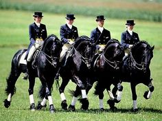Friesians, can anything compare?!