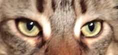 Eye(s) of the tiger: Basil the Great