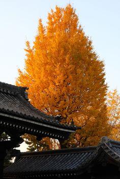 -vvaste: pure autumn (by Teruhide Tomori)